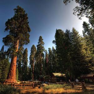 Week 4: Sequoia National Park