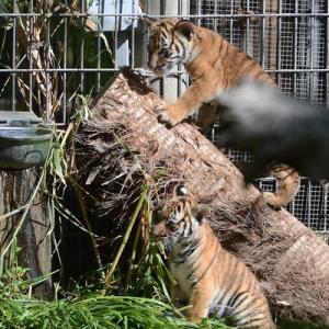 Week 8: Fresno Chaffee Zoo